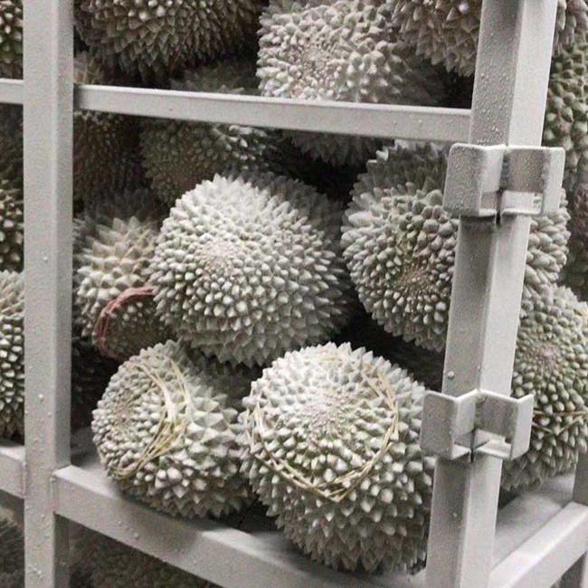 Blast Cold Storage For Frozen Durians