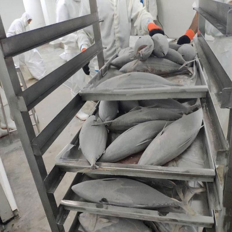 Blast Tuna Fish Cold room