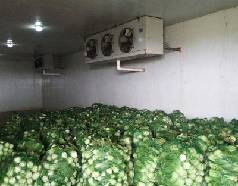 How to Build Cold Storage for Fruits and Vegetables?